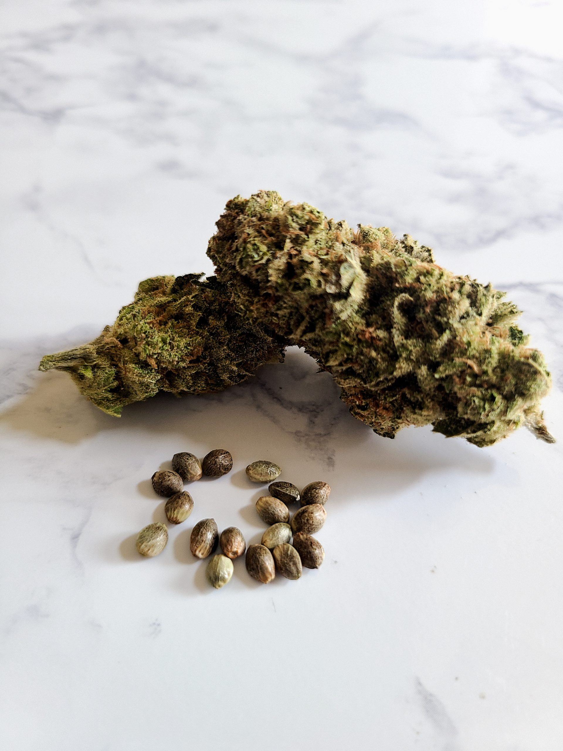 cannabis seeds with buds