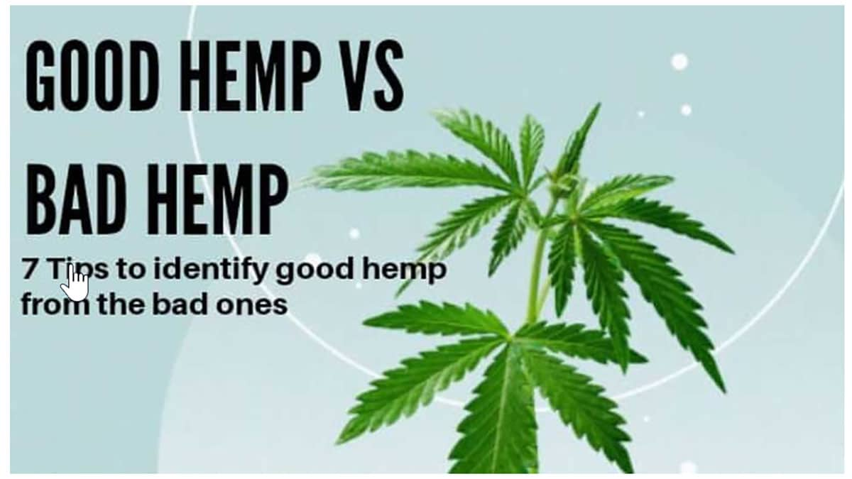 good hemp vs bad hemp