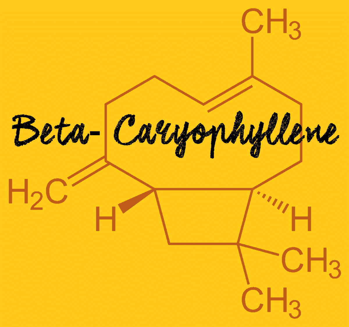 what is beta-caryophyllene