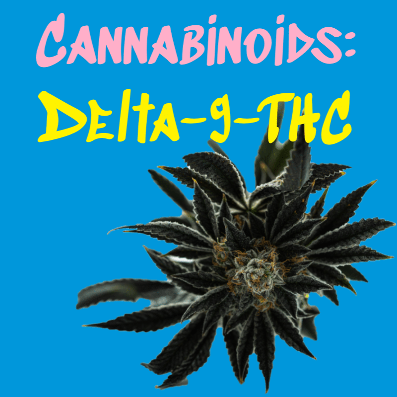 delta-9-thc cannabinoids title with marijuana plant