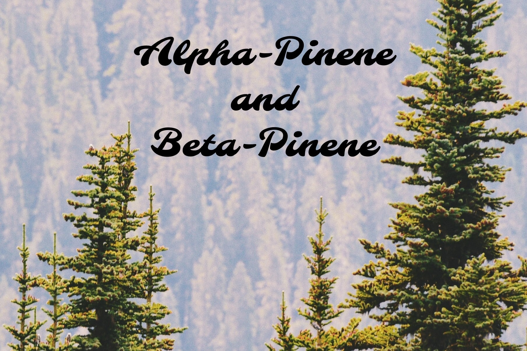 title alpha-pinene and beta-pinene terpenes
