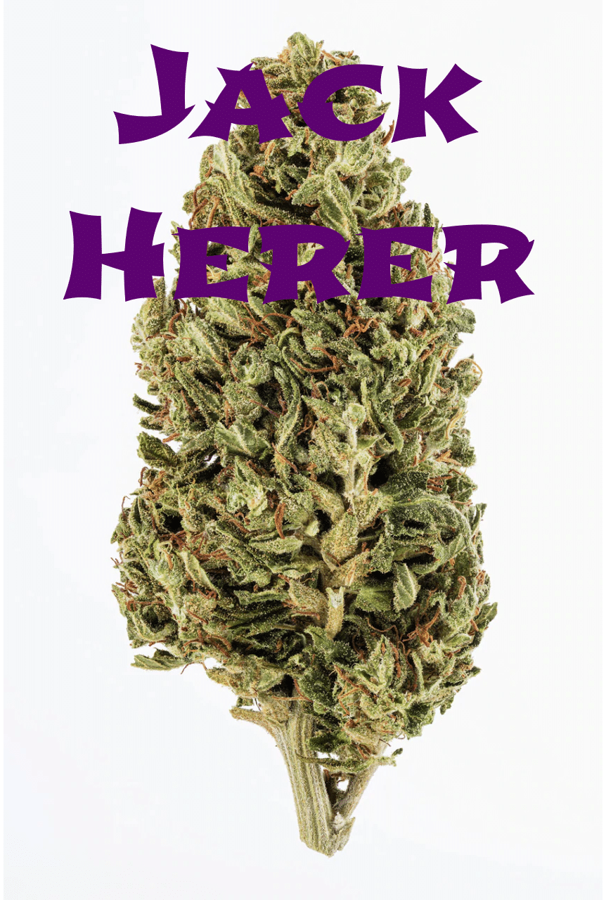 jack herer hemp strain review