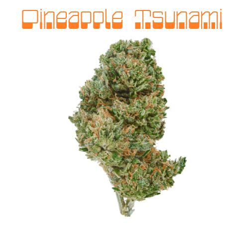 pineapple tsunami strain review