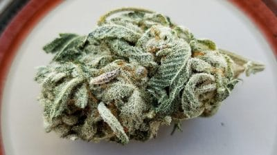 Picture of Pot flower, does weed expire.