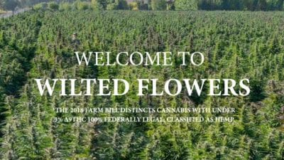 Wilted Flowers review